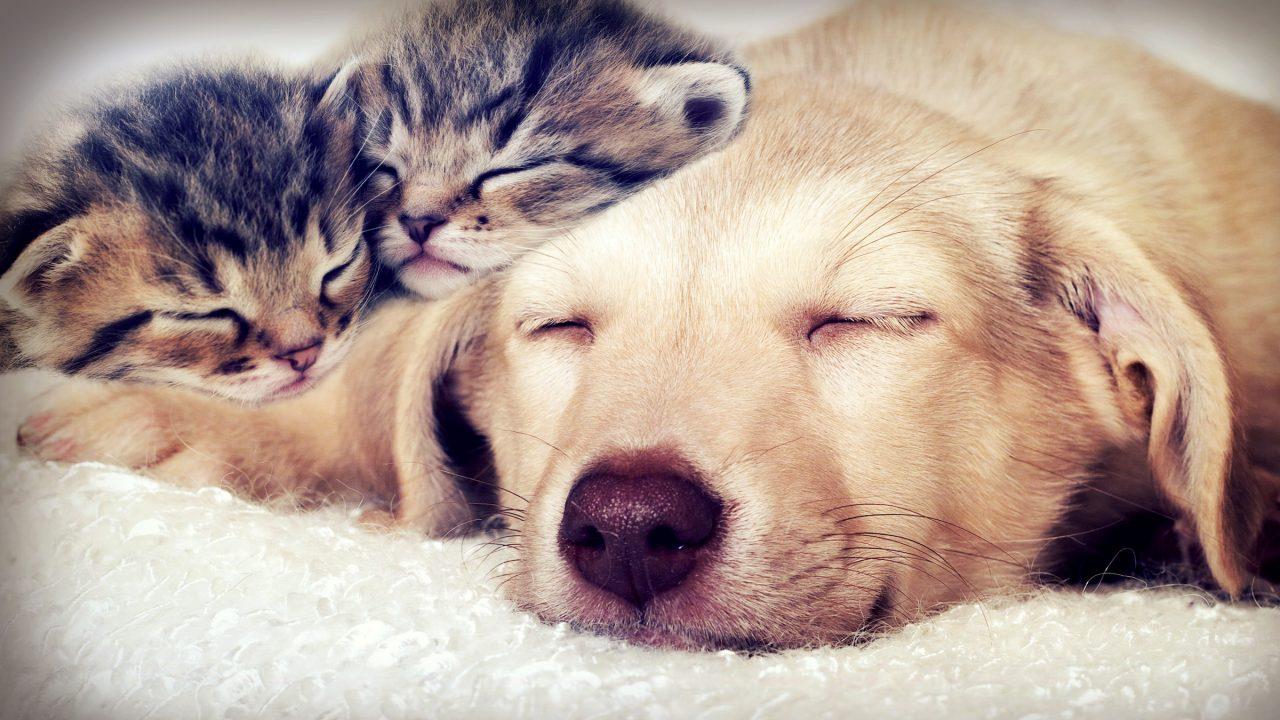 Why do some animal sleep so much?